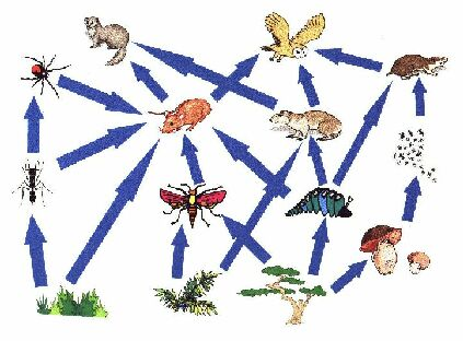 The traditional food web